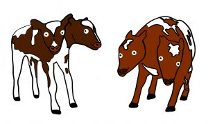 two-headed calf illustrations