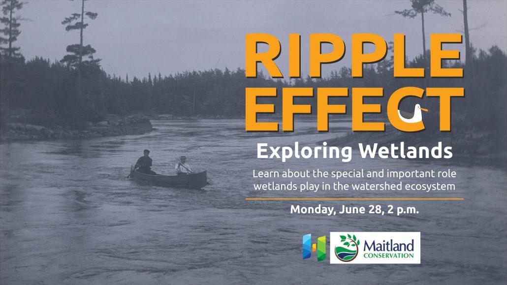Exploring Wetlands virtual event