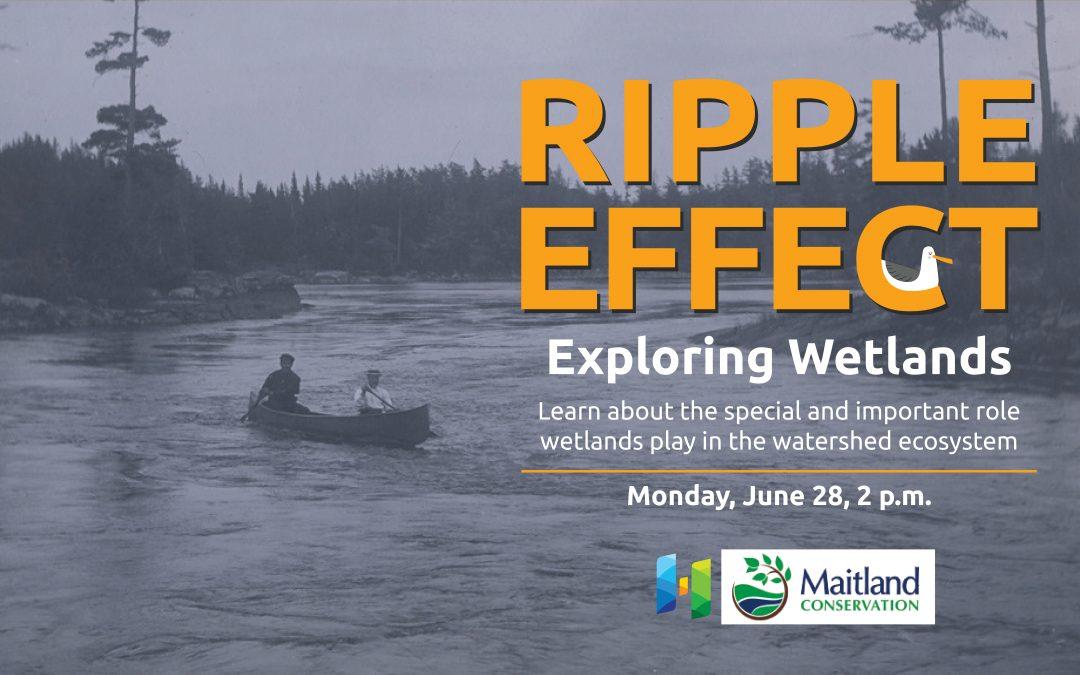 NEW DATE – Ripple Effect: Exploring Wetlands