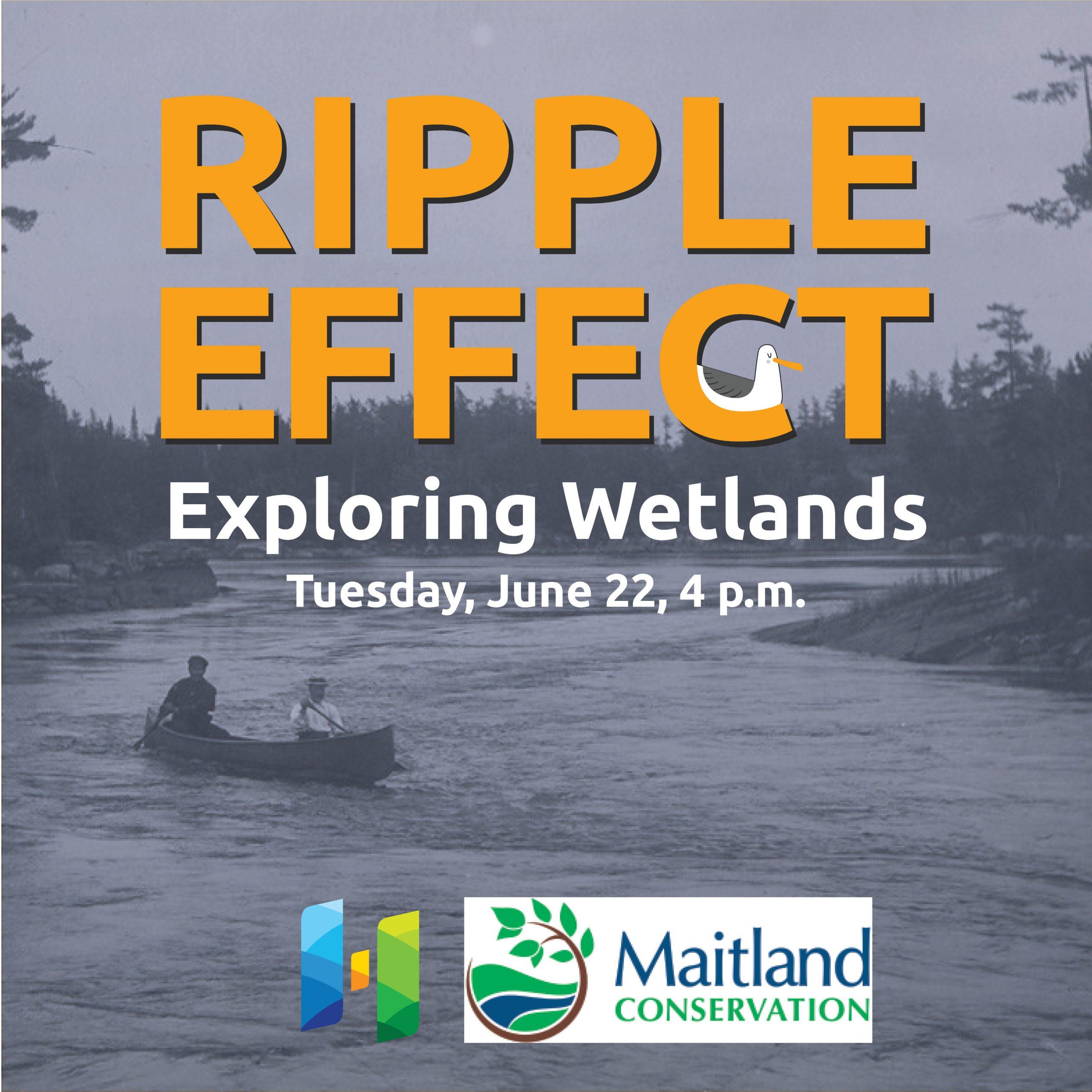 Ripple Effect: Exploring Wetlands June 22, 4 p.m.