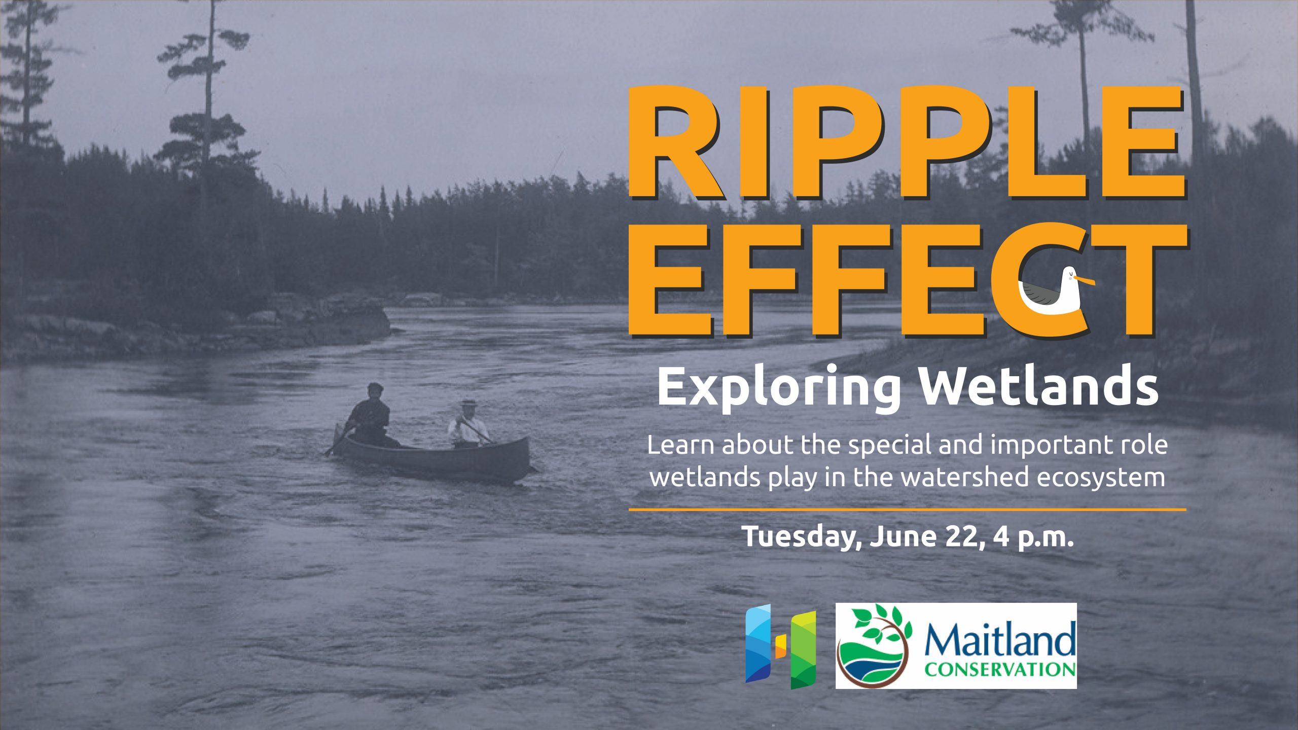 Graphic of event Ripple Effect: Exploring Wetlands