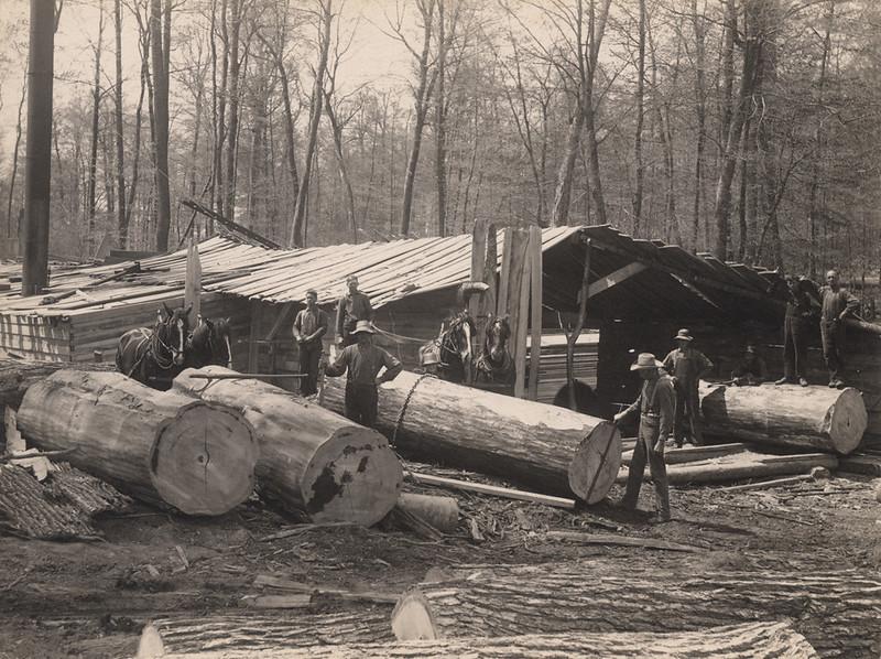 RR Sallows photo logging camp